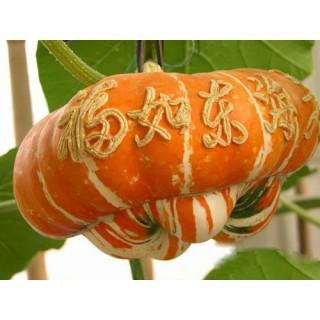 香炉瓜种子,福瓜种子