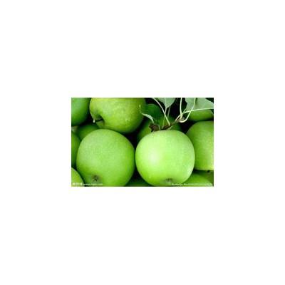 陕西早熟苹果基地|美八苹果|藤木苹果|夏红苹果批发价格
