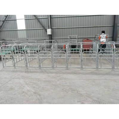 现货销售 养猪用定位栏 母猪落地式限位栏 规格可定制